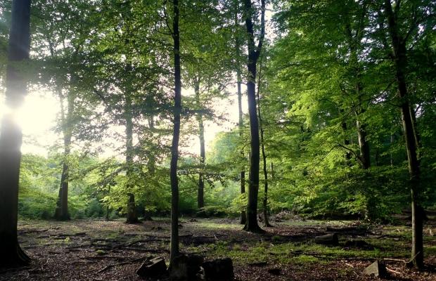 Sachsenwald Ewigforst Impressionen 11