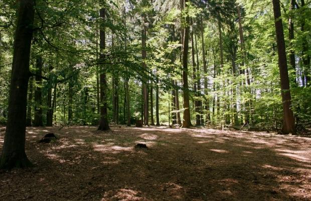 Sachsenwald Ewigforst Impressionen 2