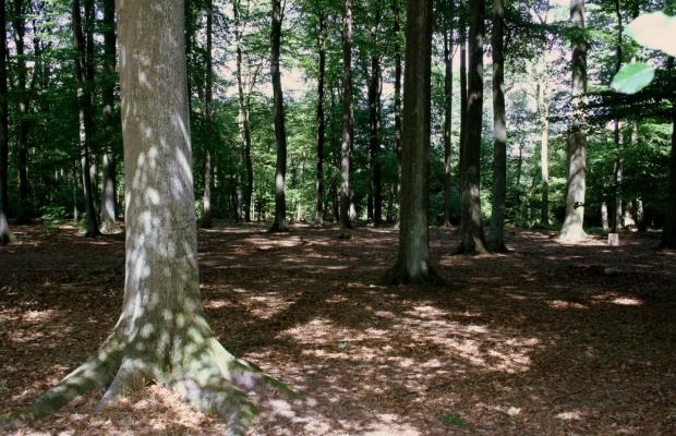Sachsenwald Ewigforst Impressionen 8