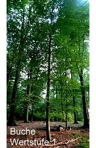 Sachsenwald Ewigforst Wertstufe 1